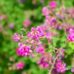 仙台市野草園 2018 萩まつり 9月15日から開催 仙台フィル演奏・アクセス等ご案内