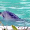 イルカのハニーを助けて 閉館水族館に1頭残され心配の声多数 譲渡先難航