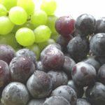 「1本のワイン誕生物語」山形県南陽市 ブドウ園・「紫金園」ぶどう狩り おすすめ赤湯温泉