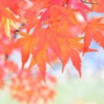 仙台・ガイドさんおすすめ 宮城県内・紅葉スポット&松島グルメ情報