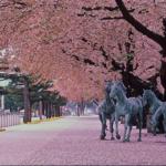 小説「流鏑馬ガール!」映像化の動き 女性騎士「桜流鏑馬」・「駒の里」十和田