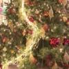 仙台駅前 巨大クリスマスツリー登場 午後5時~0時毎日点灯 12月25日まで