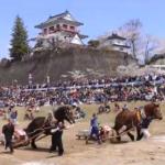 涌谷「東北輓馬競技大会」4月21日(日) 桜とお城と輓馬競技