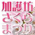 加護坊さくらまつり2019.4.11(木)~開催 山頂のパノラマ・八重桜が非常に美しい