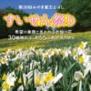 みやぎ蔵王えぼし「すいせん祭り」2019 4/19(金)~開催 イベント