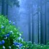 変幻の花「紫陽花」岩手県一関 みちのくあじさいまつり2019 見ごろ