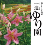 一迫ゆり園2019 6/21(金)~7/25(木) 歩く姿は百合の花 くりこま高原の風に揺れ
