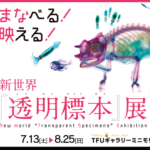 不思議なアート「透明標本展」2019 7/13(土)~ 仙台東口TFUギャラリー